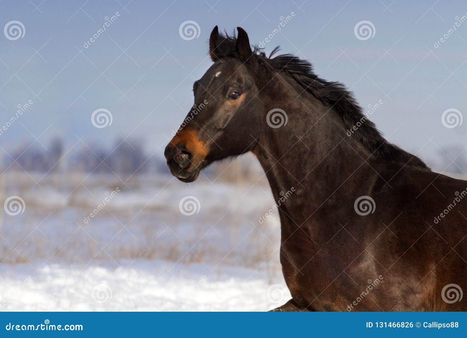 Horse run fun in snow