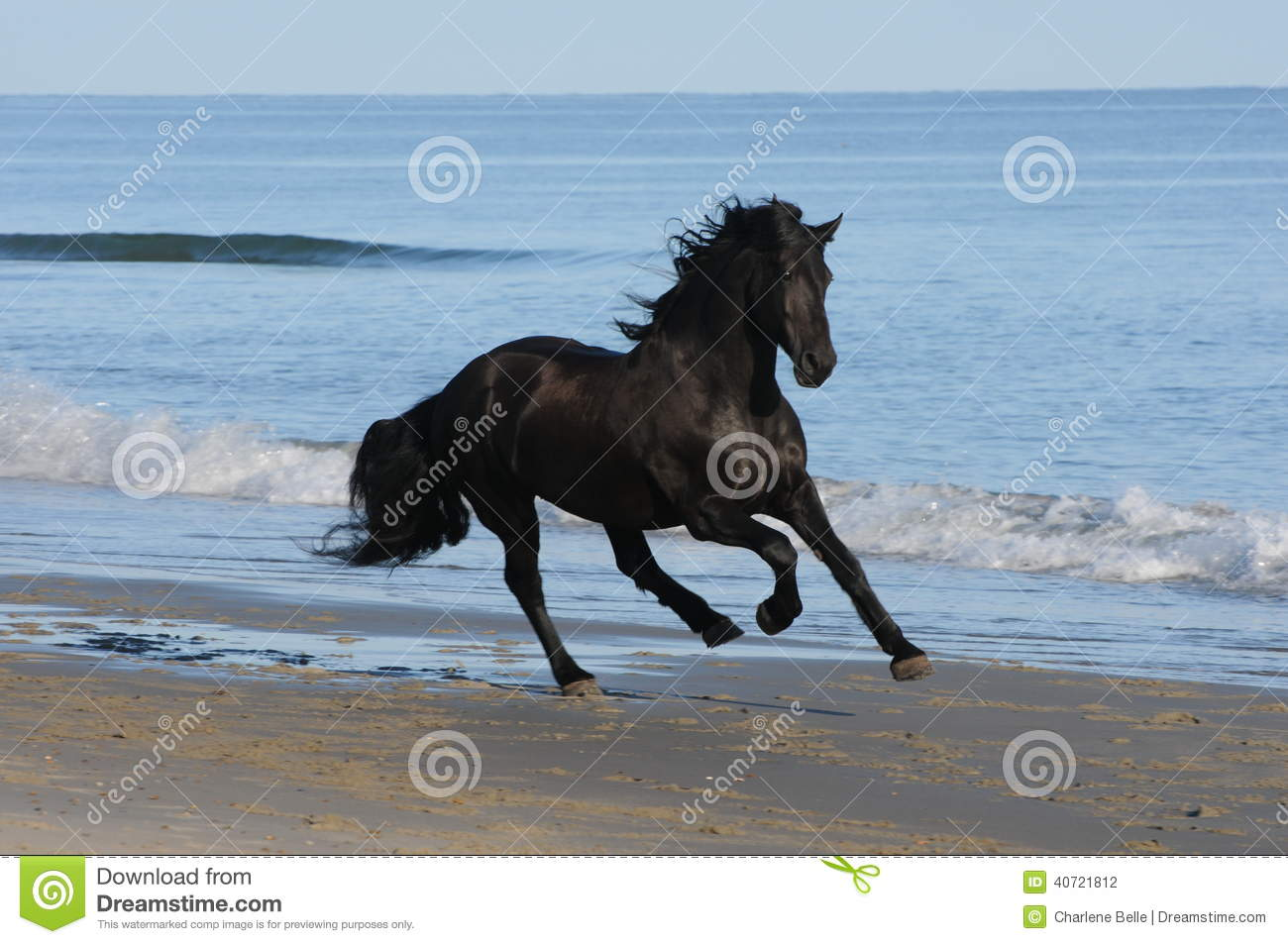 A Horse Is Running On The Beach Stock Photo - Image: 40721812