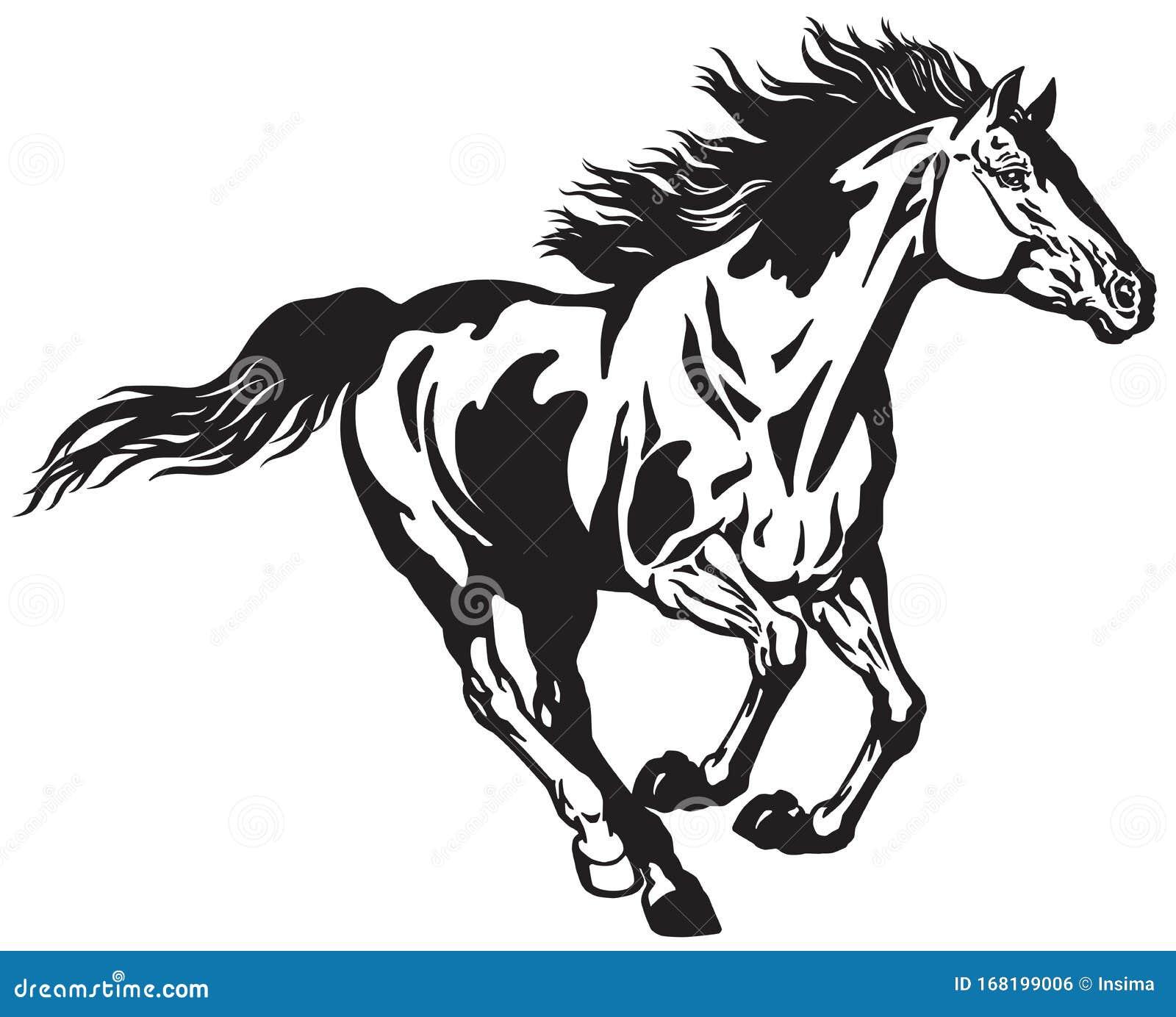 Wild Horse Running Free Black And White Stock Vector Illustration Of Stallion Stable 168199006