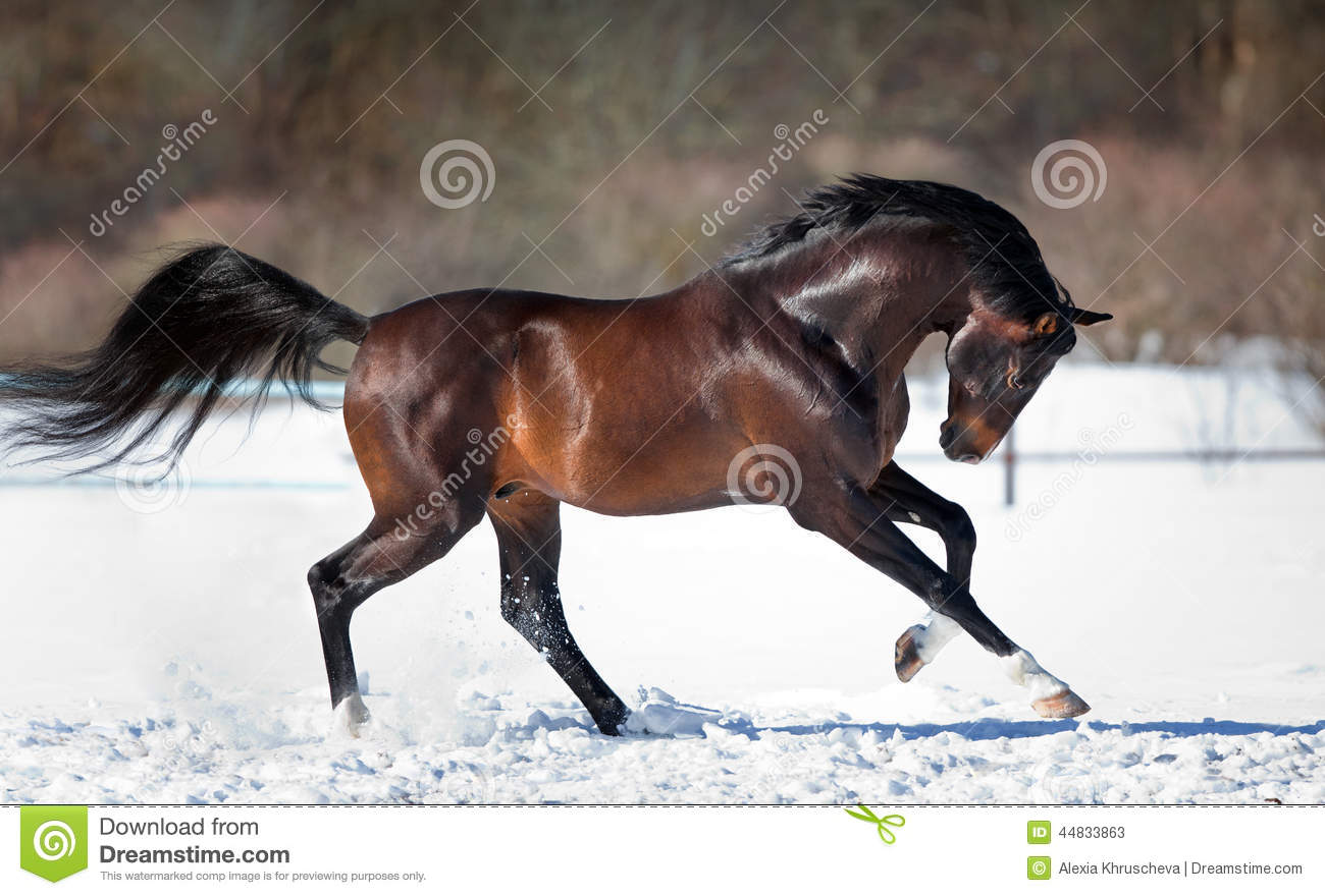 horse running in the snow stock photo image 44833863 horses clip art images horse clipart romance