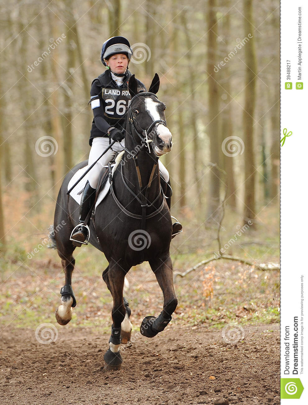 Land Rover Solon >> Horse Running Through Woods Editorial Photography - Image of horse, sport: 39488217