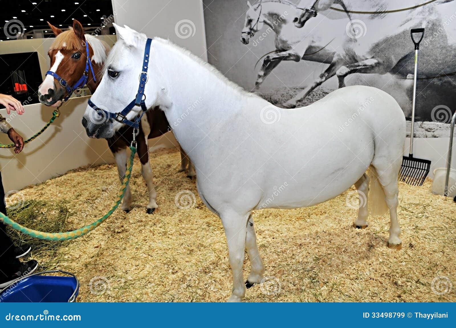 Horse Show At Abu Dhabi International Hunting And