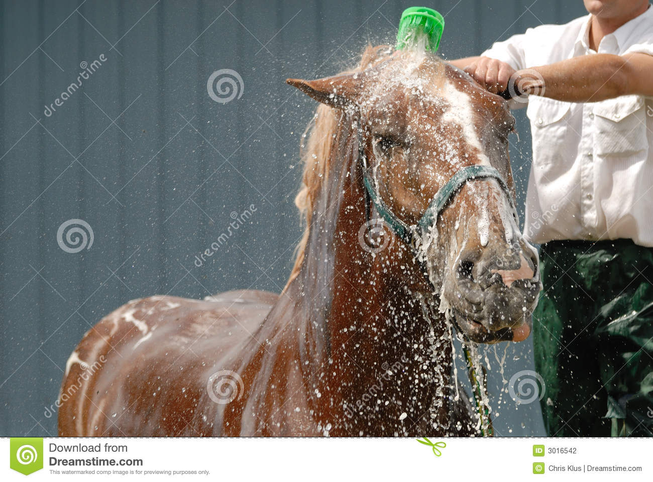 Royalty Free Stock Photo. Download Horse Shower ...