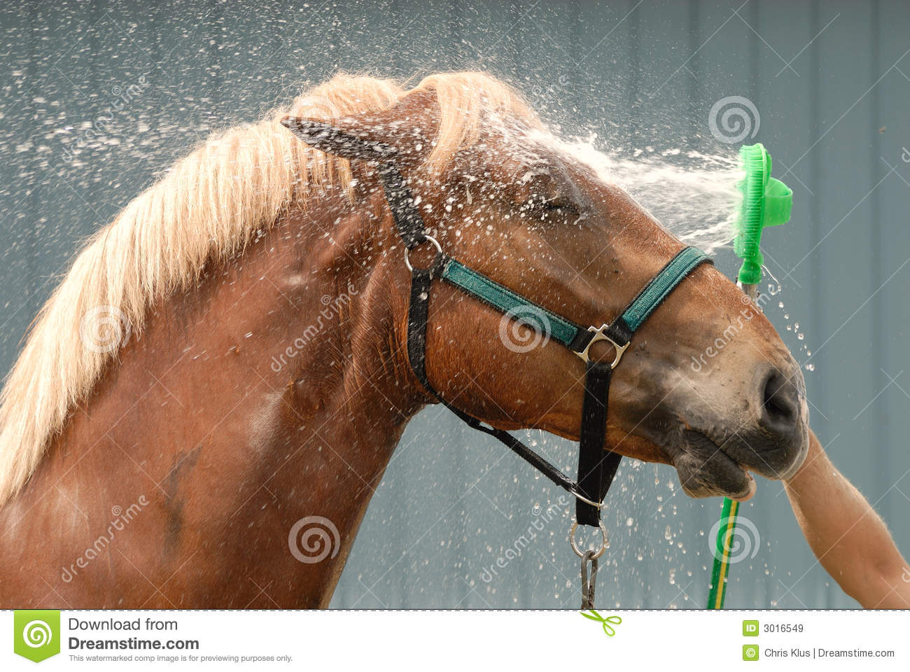 Nice Horse Shower