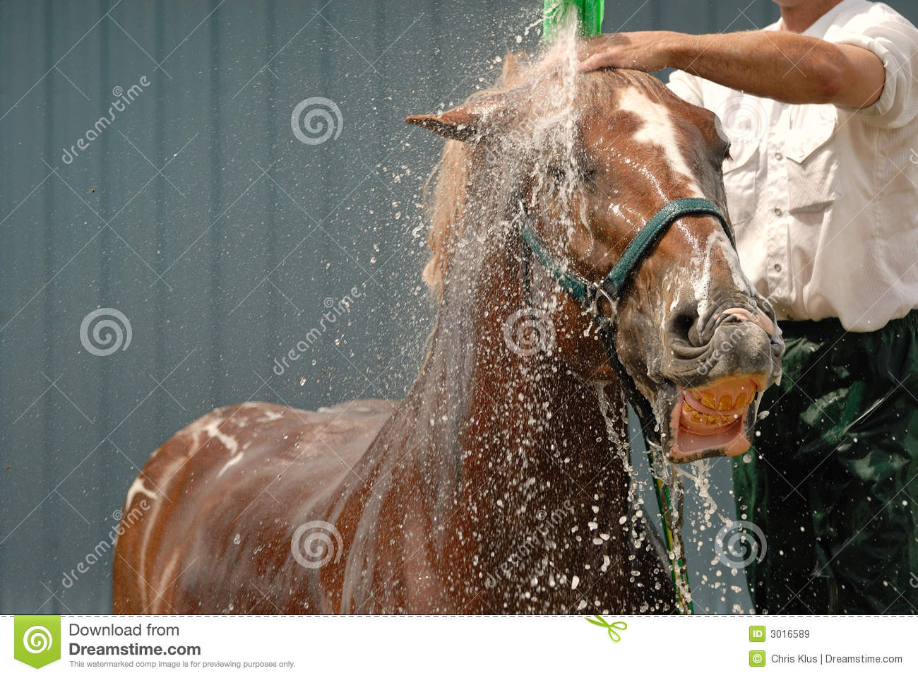 Horse Shower Royalty Free Stock Images