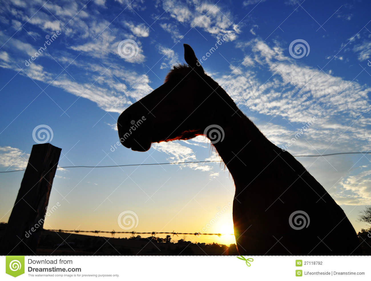 Horse Silhouette In Sunset On Country Farm Stock Photography - Image ...