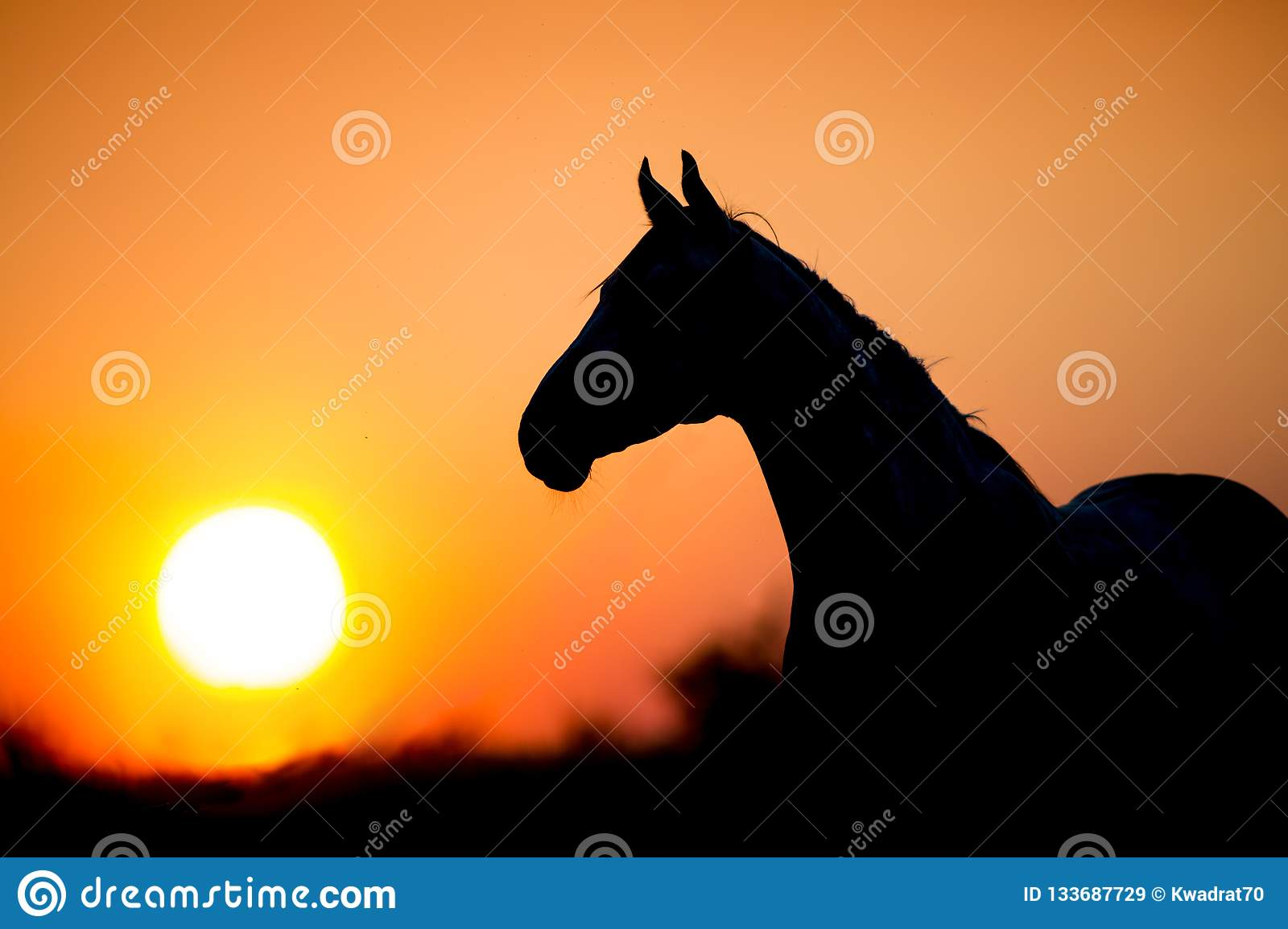 5 628 Horse Silhouette Sunset Photos Free Royalty Free Stock Photos From Dreamstime