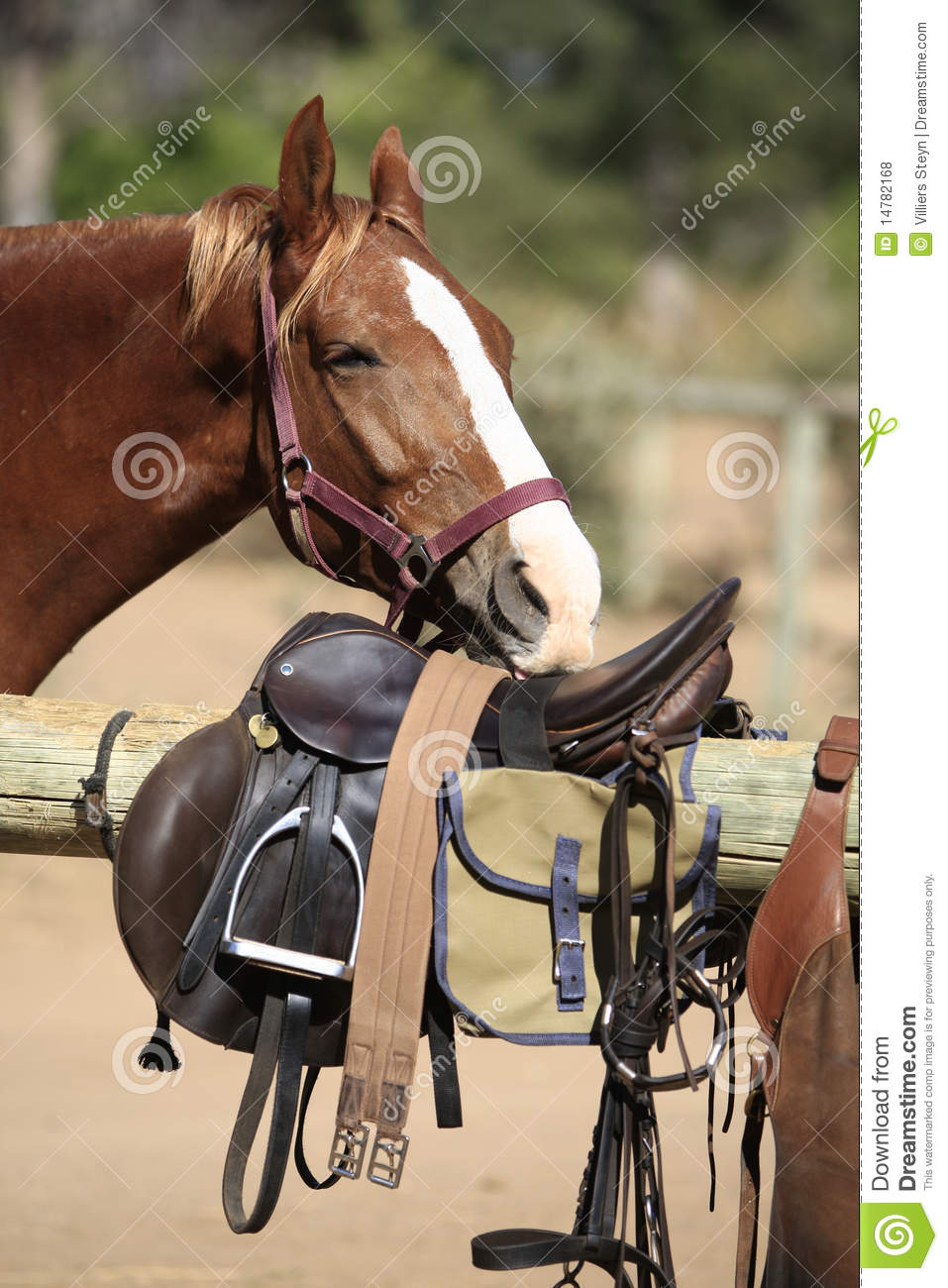 Horse Smelling Riding Gear Stock Photo Image Of Metal 14782168