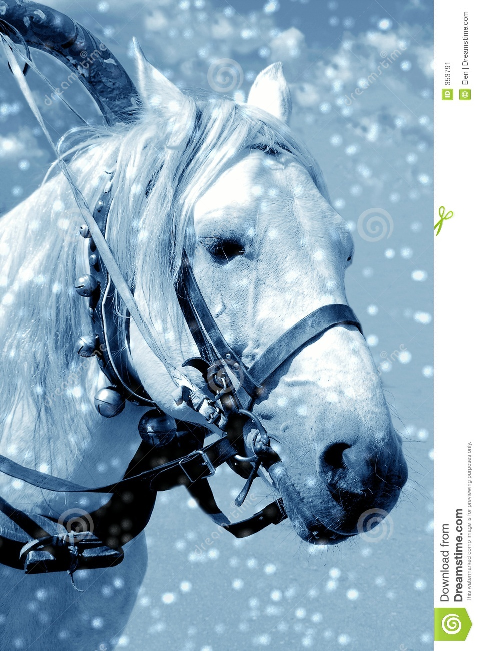 horse in snow stock image  image of night  background  white