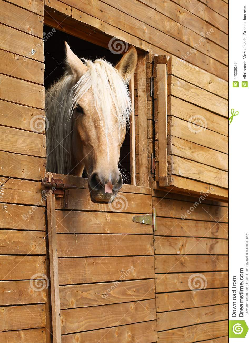 Horse In The Stable Royalty Free Stock Images Image