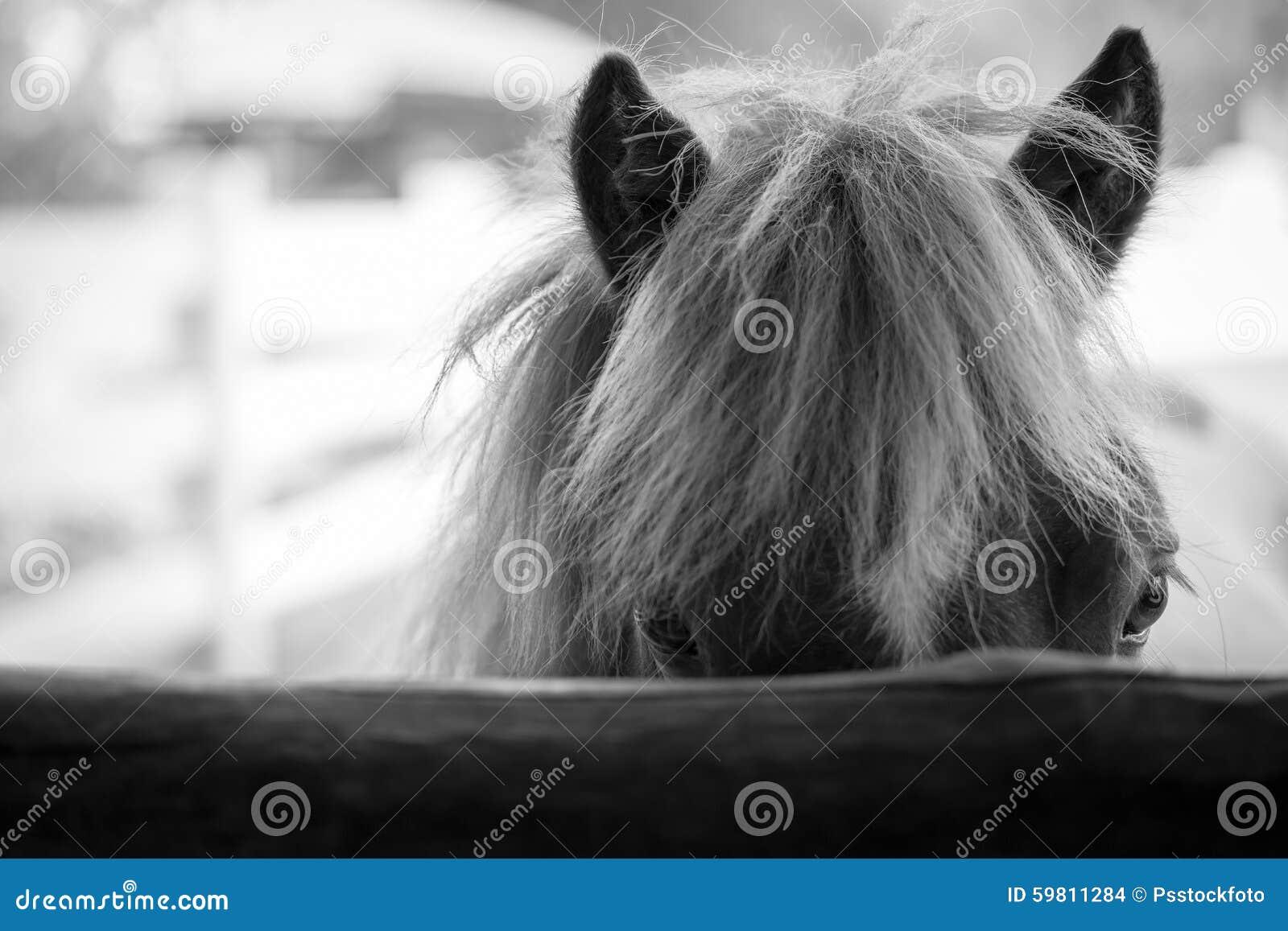 Black horse face close up - photo#21