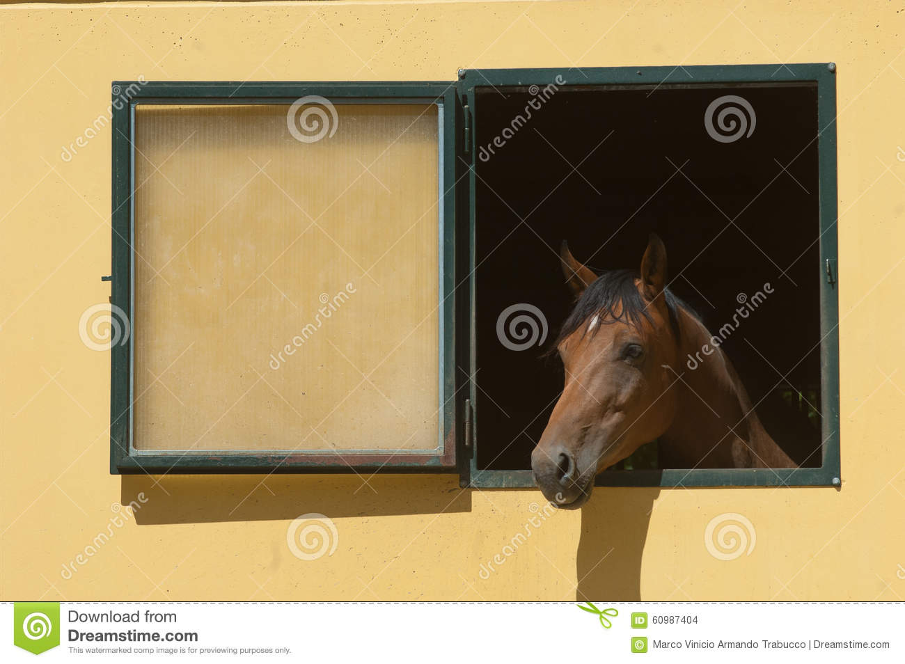 Horse stabled at the window stock photo image 60987404 for Window horses