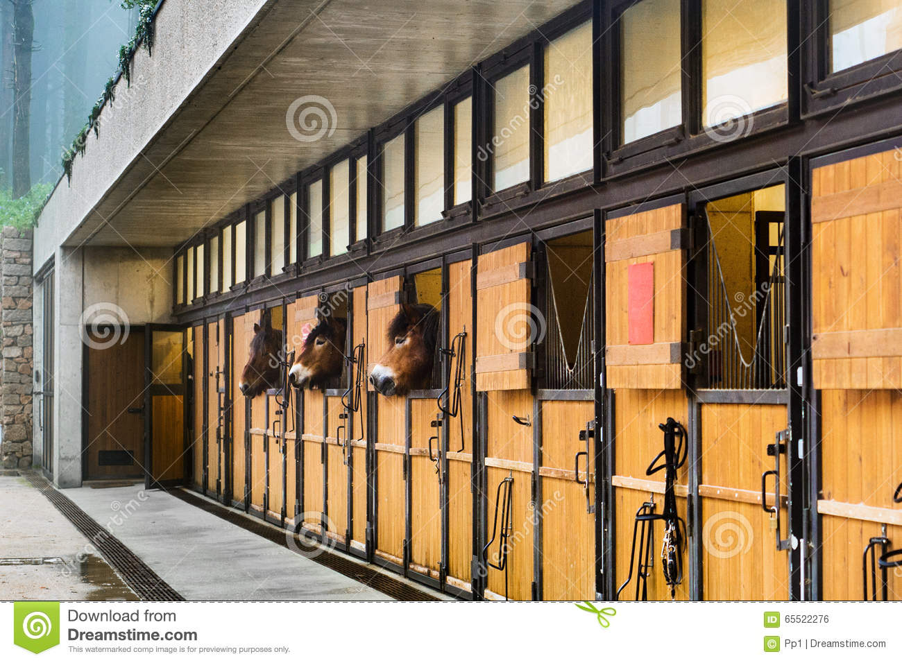 Horse Stables Modern Stock Photo Image Of Animal Draught 65522276