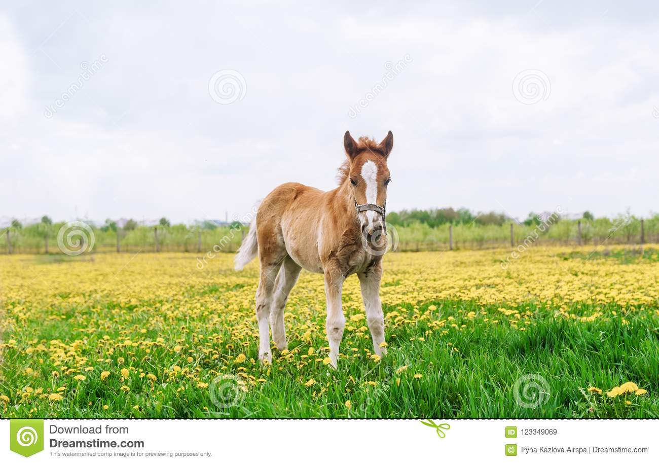 Horse, standing on a field with dandelions. Horse in the nature.