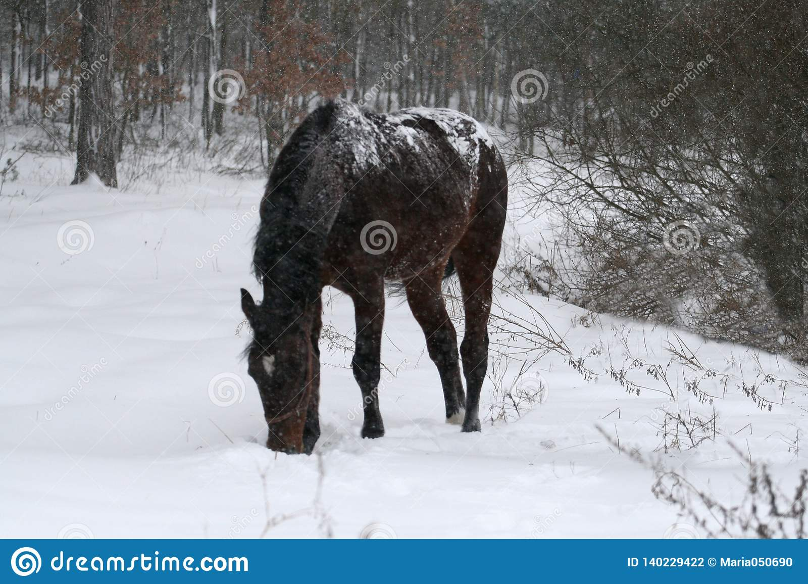 Horse staying in the snow during a snowfall in the field