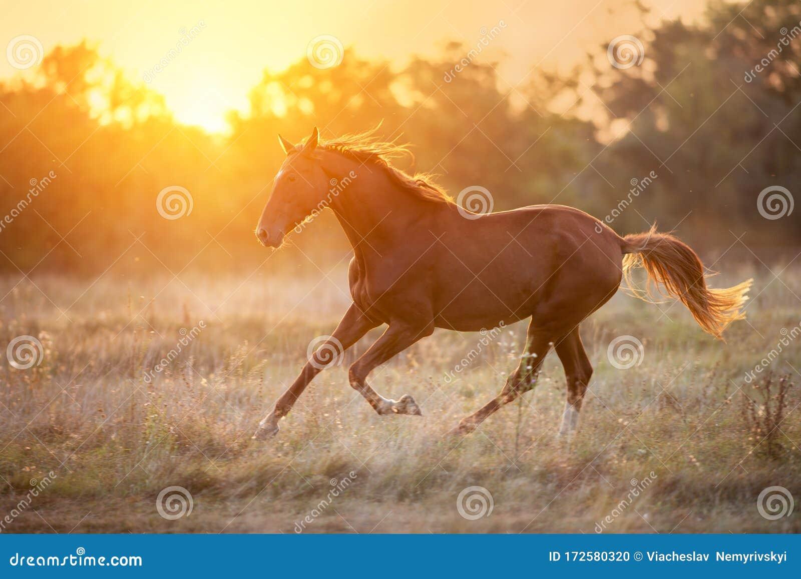 Horse At Sunset Stock Photo Image Of Motion Orange 172580320