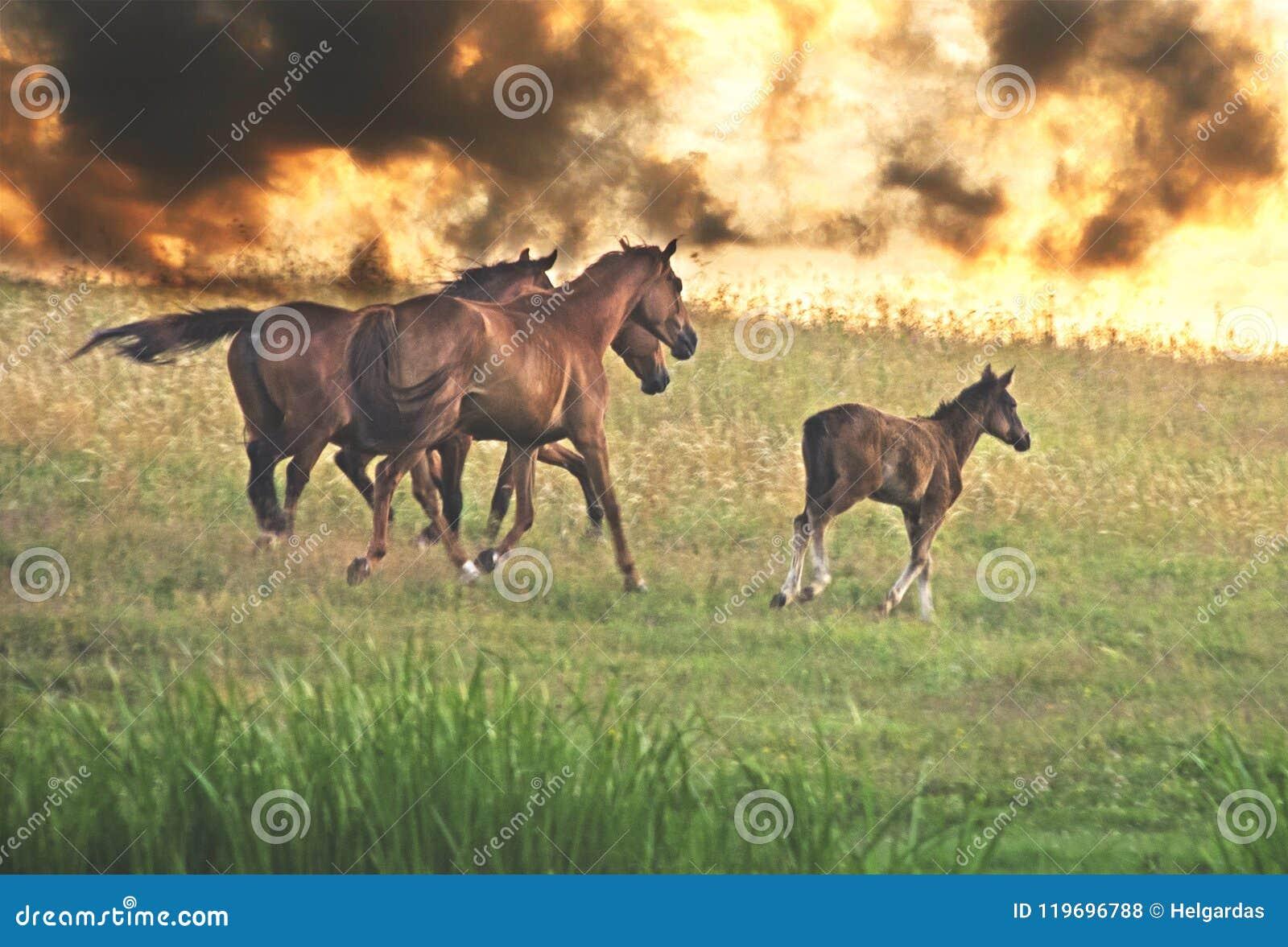 Horse at sunset run