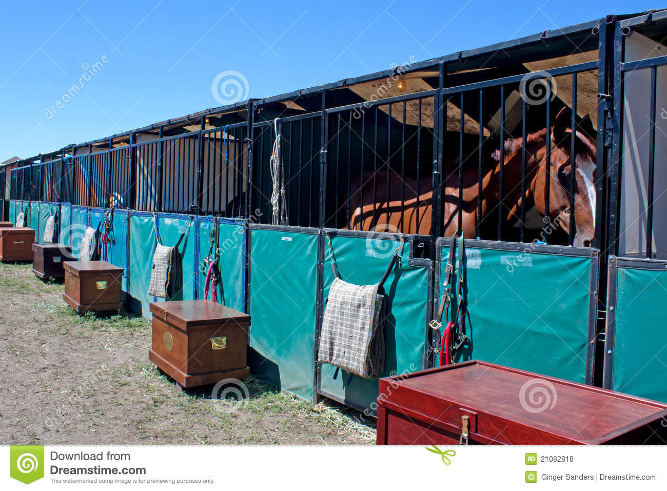 Horse In Temporary Show Stall