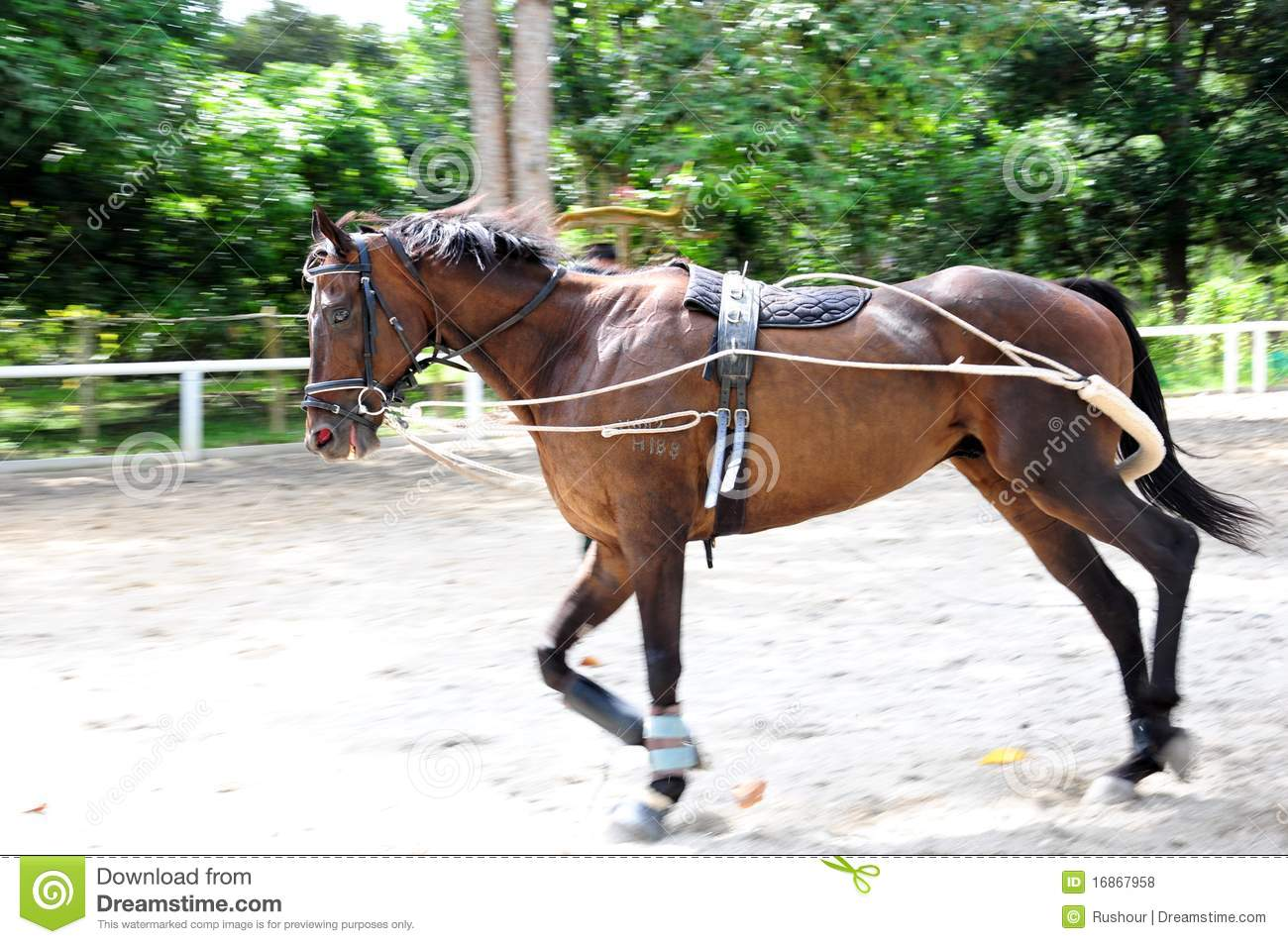 Horse training at hand - shoulder in - YouTube |Horse Training