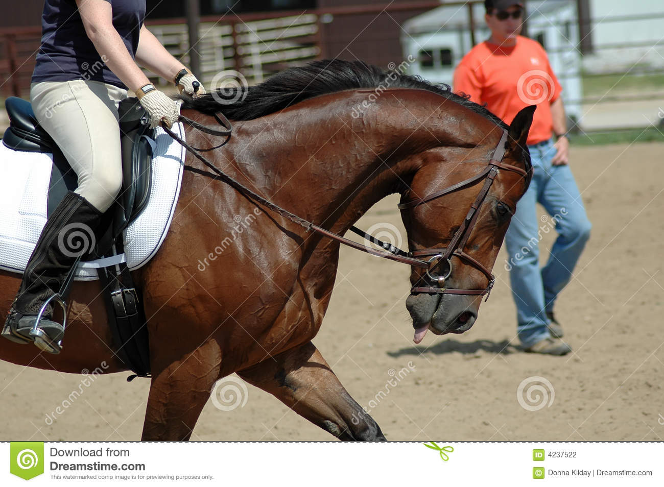 59 best images about Clinton Anderson Down under ... |Horse Training