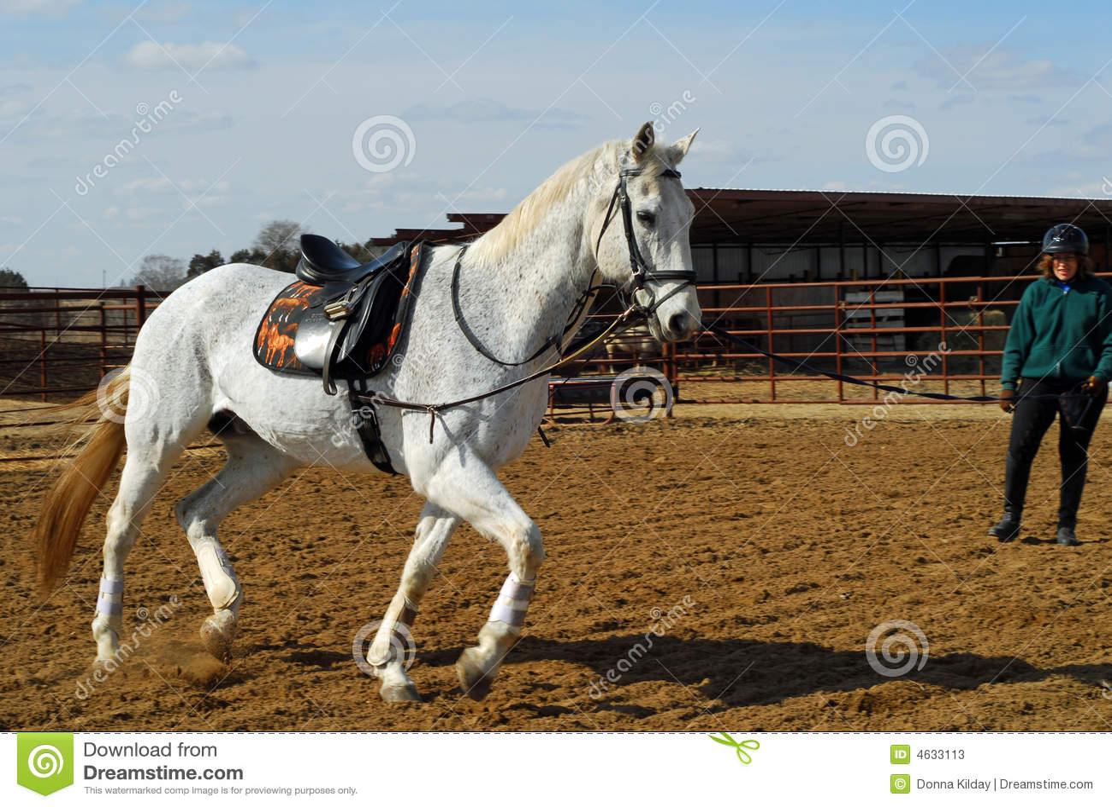 Neil Davies. Horse Training Basics. Ground Lessons - YouTube |Horse Training