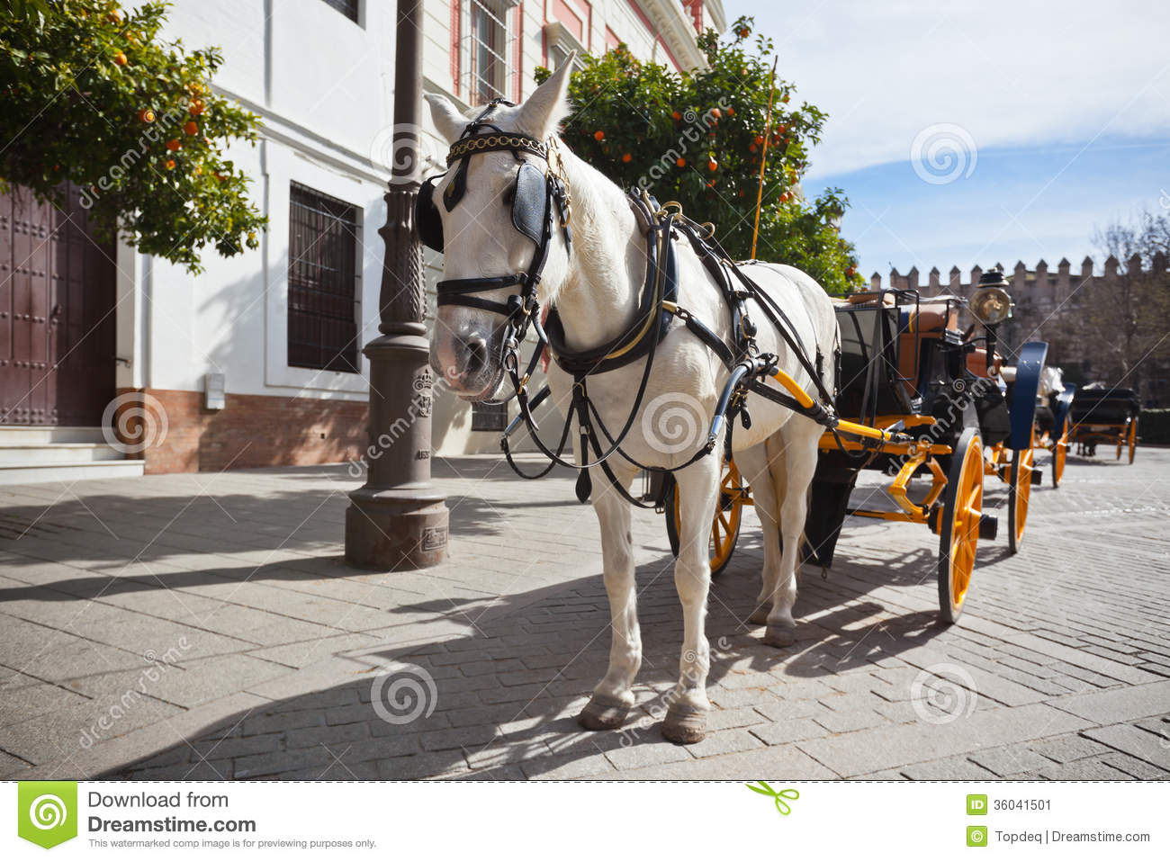 Horse Transport For Tourists In Sevilla Spain Stock Image