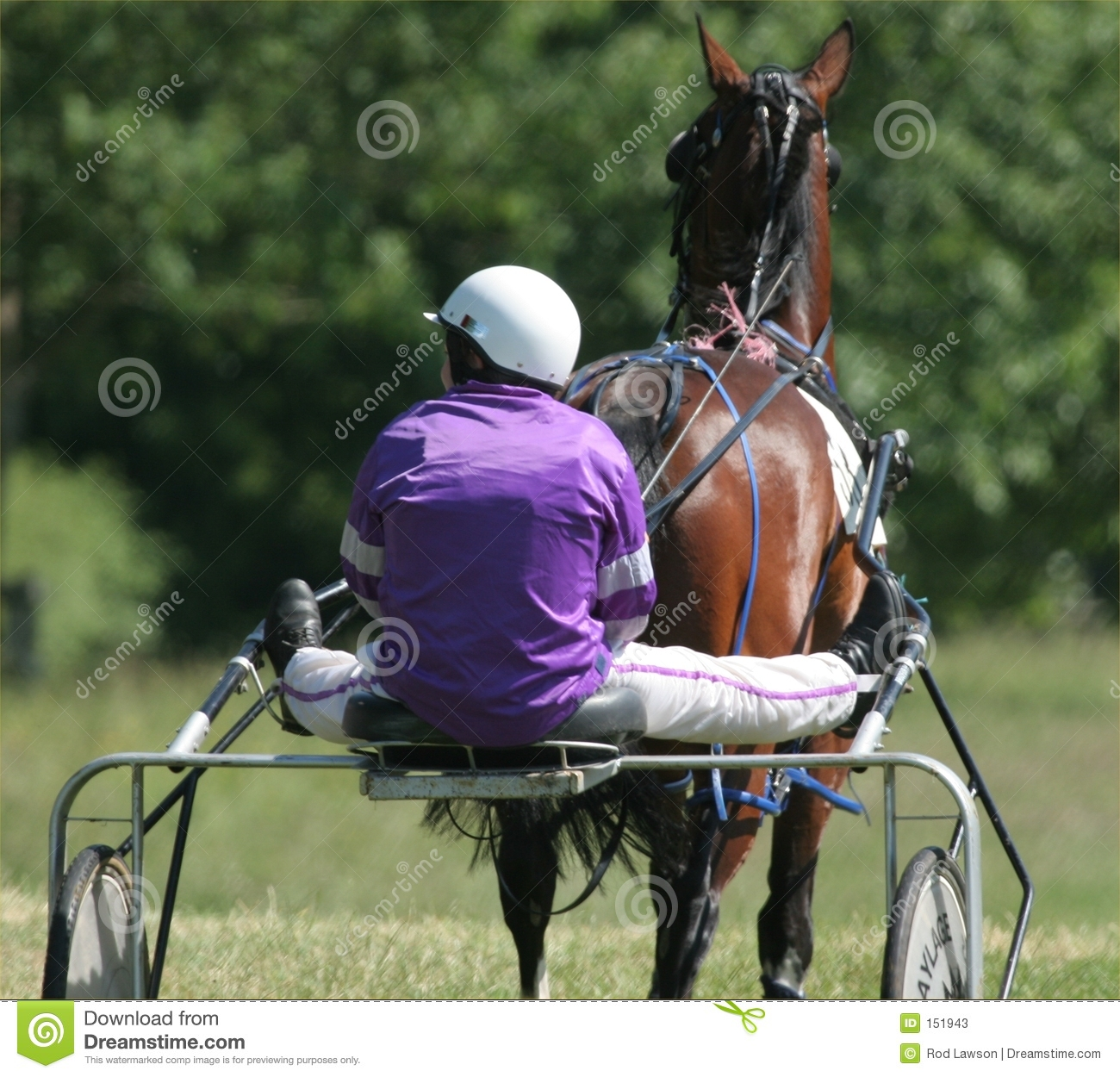 Horse and Trap Race