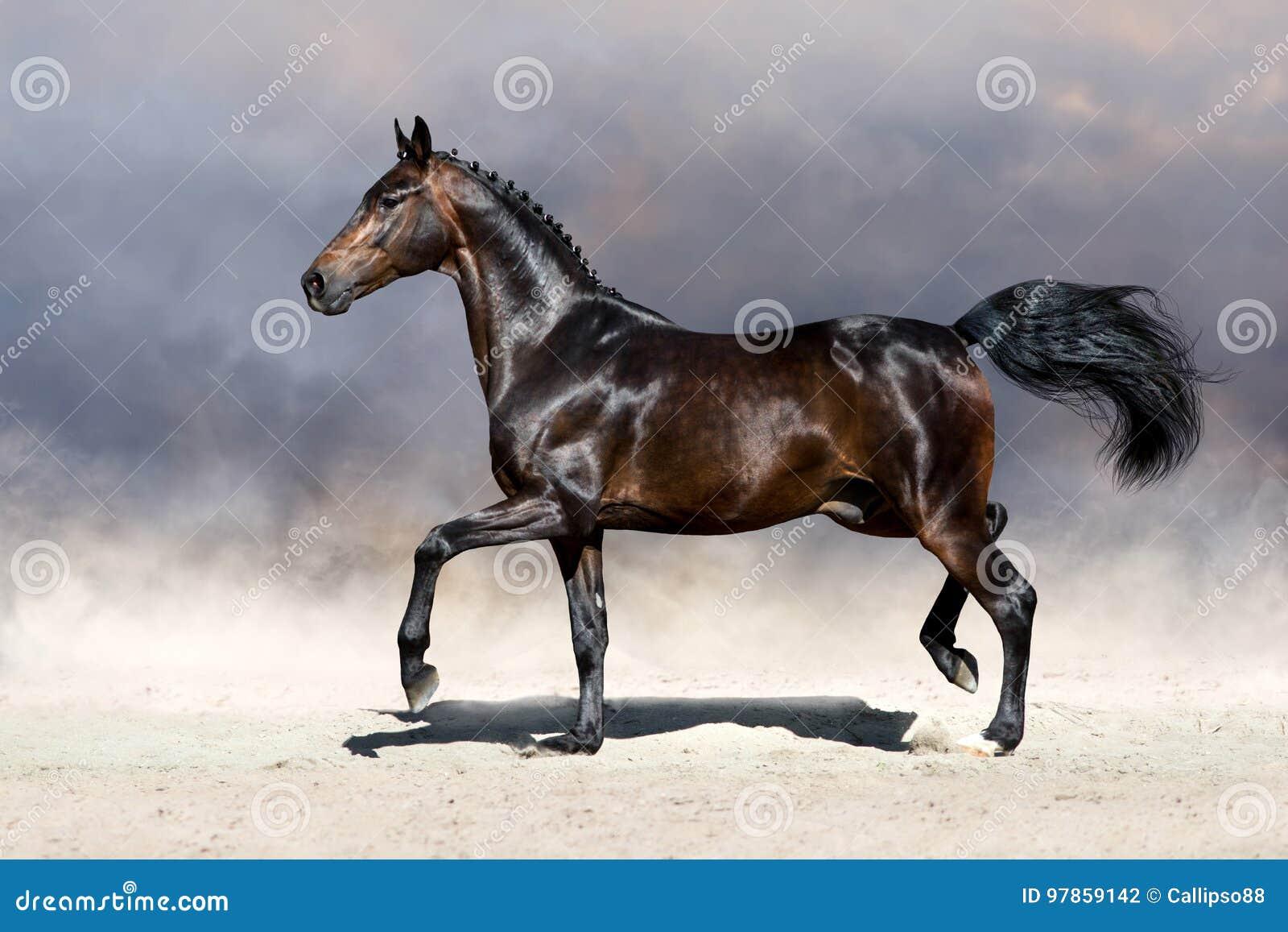 Horse trotting in desert
