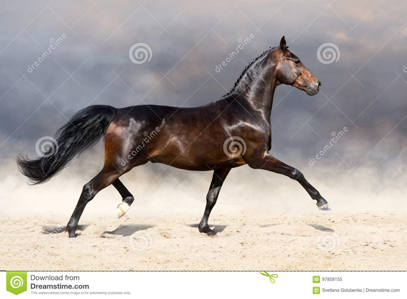 Horse trotting in desert