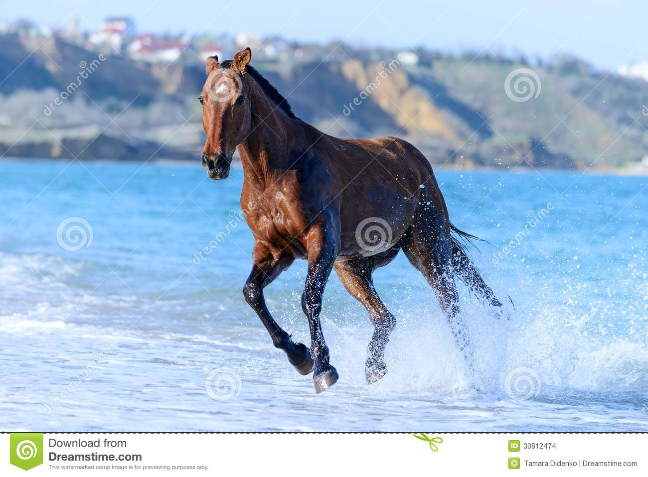 Brown horse running in water