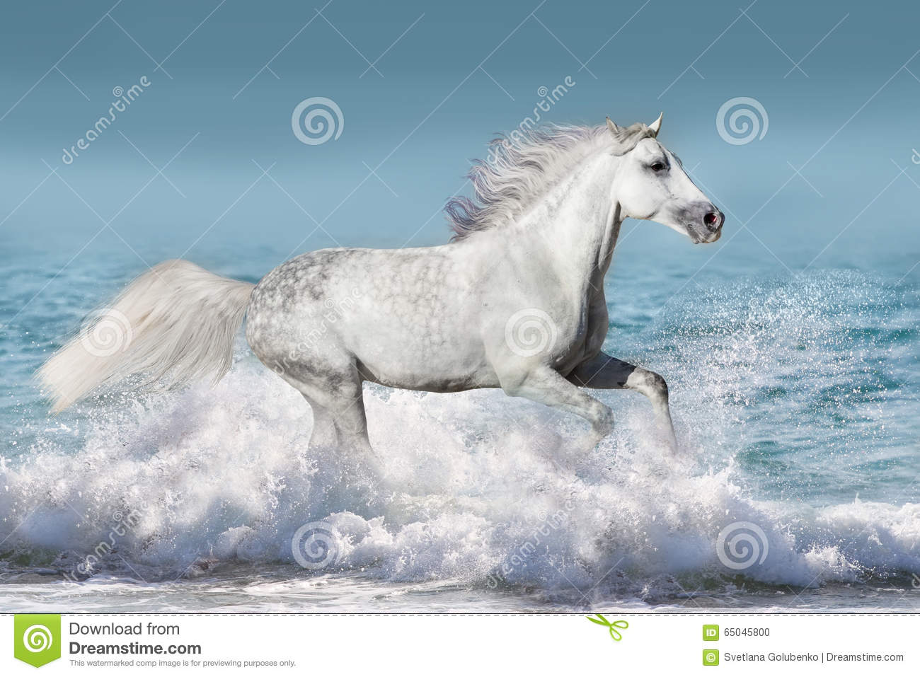Horse In Water Stock Photo Image Of Landscape Elegant