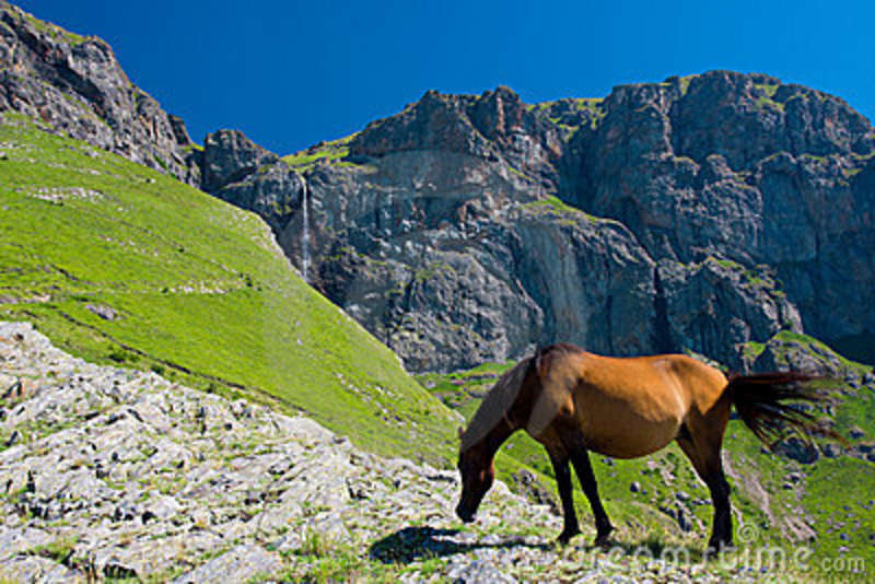 Horse And Waterfall Stock Images Image 10363414