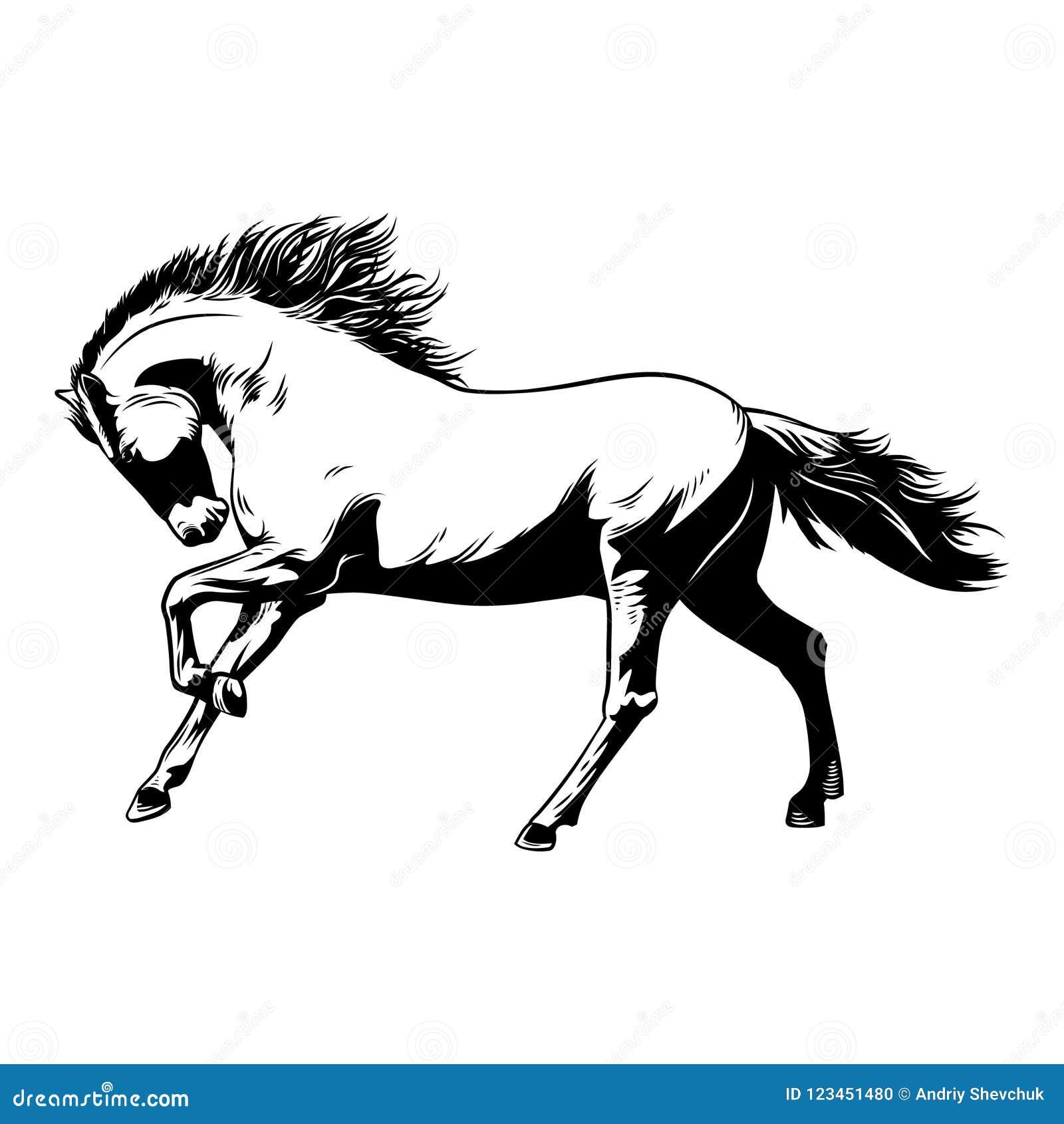 Horse White Black Vector Illustration Beautiful Horse Racing Stock Vector Illustration Of Isolated Grayscale 123451480