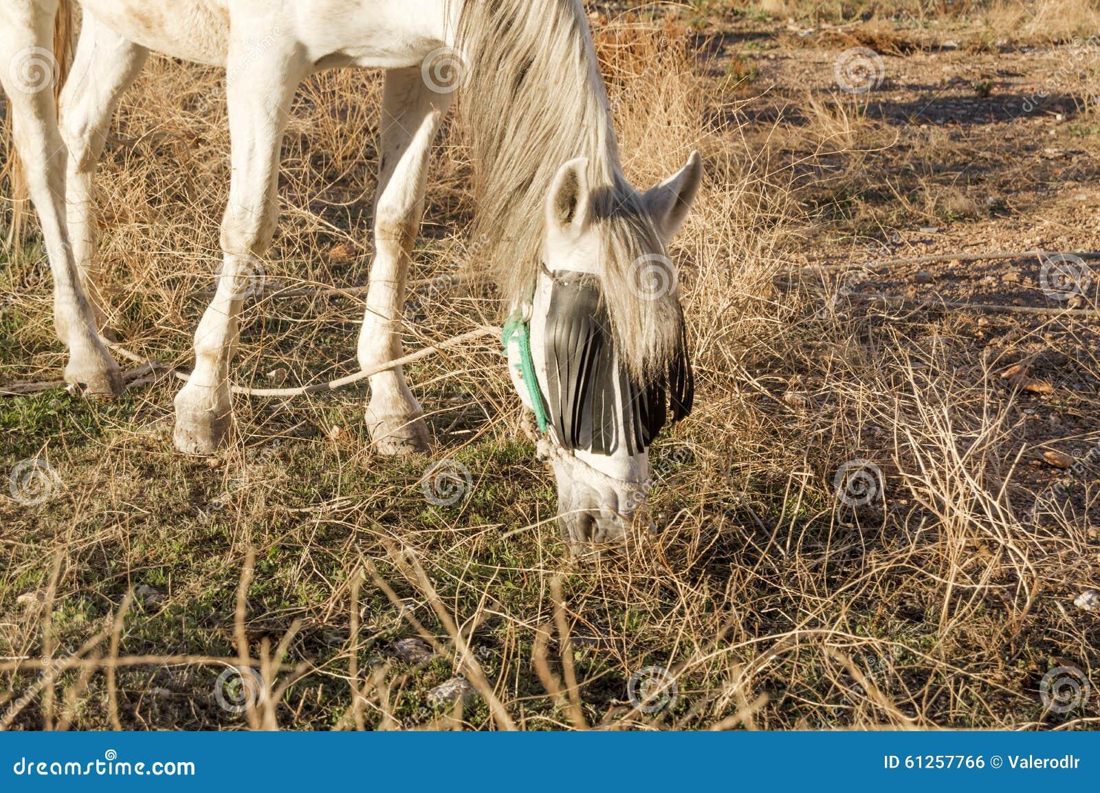 White horse eating grass - photo#20