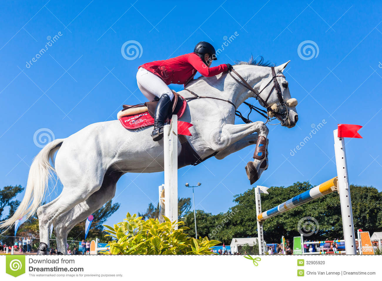 Equestrian Horse White Woman Red Jump Poles Editorial Image Image Of Animal Courage 32905920