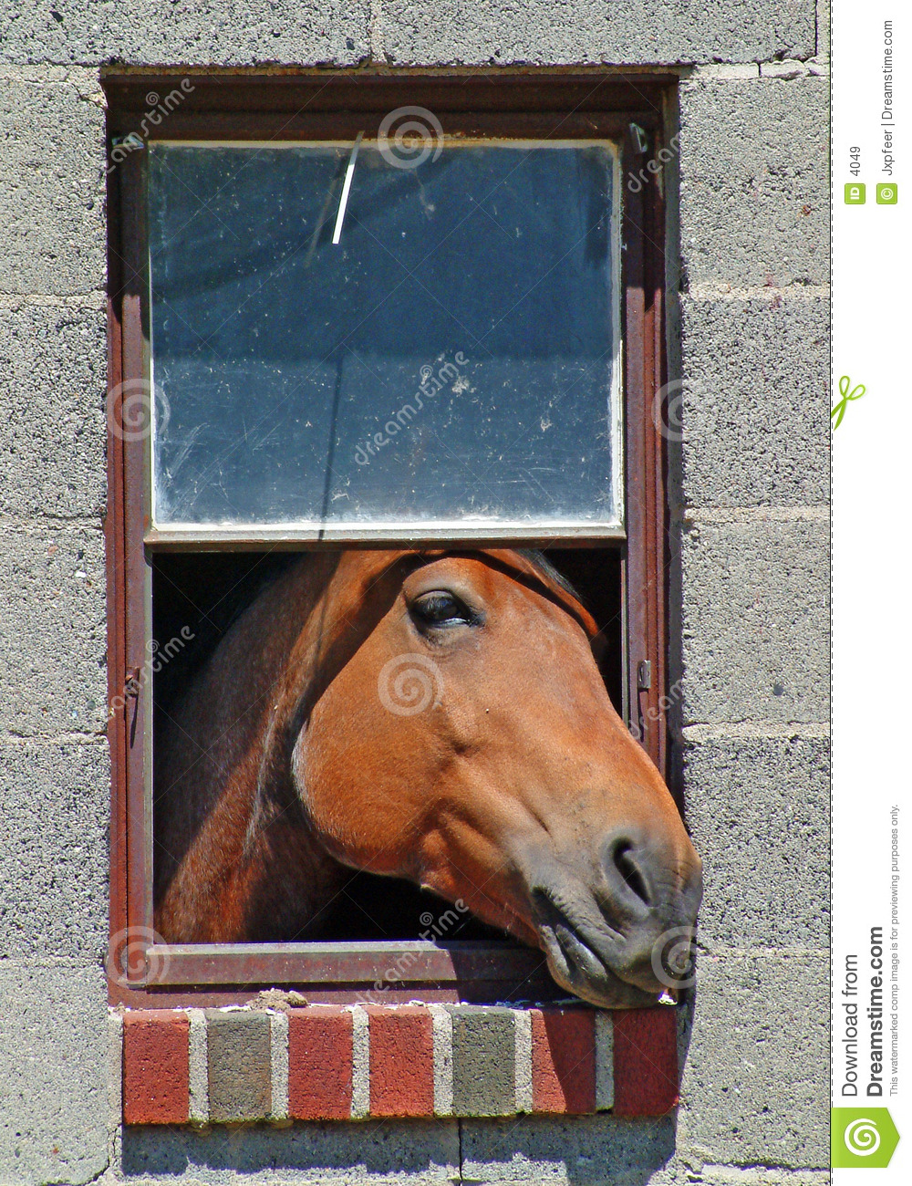 Horse in the window royalty free stock images image 4049 for Window horses