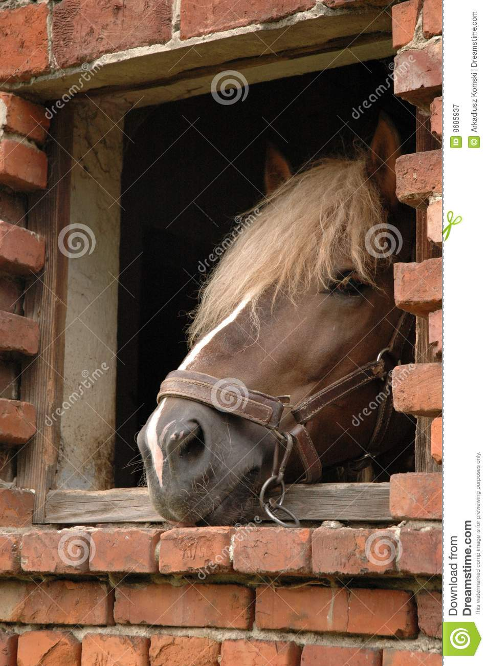 Horse in window royalty free stock photography image for Window horses