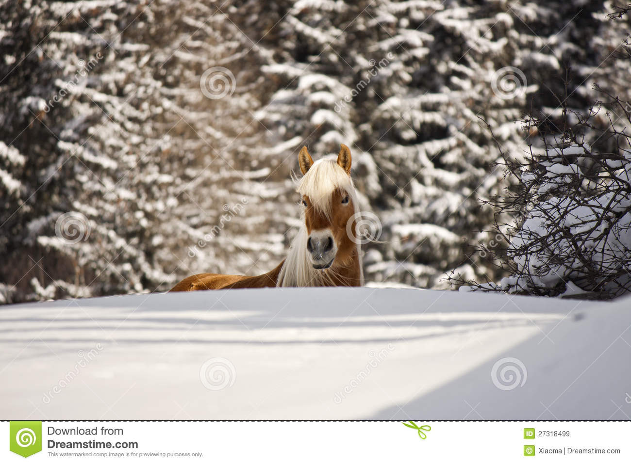 Horse in a winter landscape