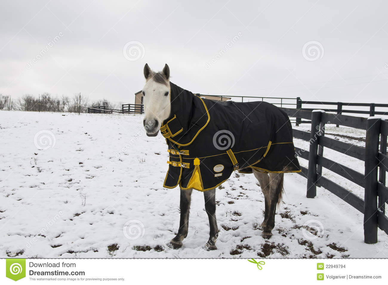 how to tell if a horse is cold