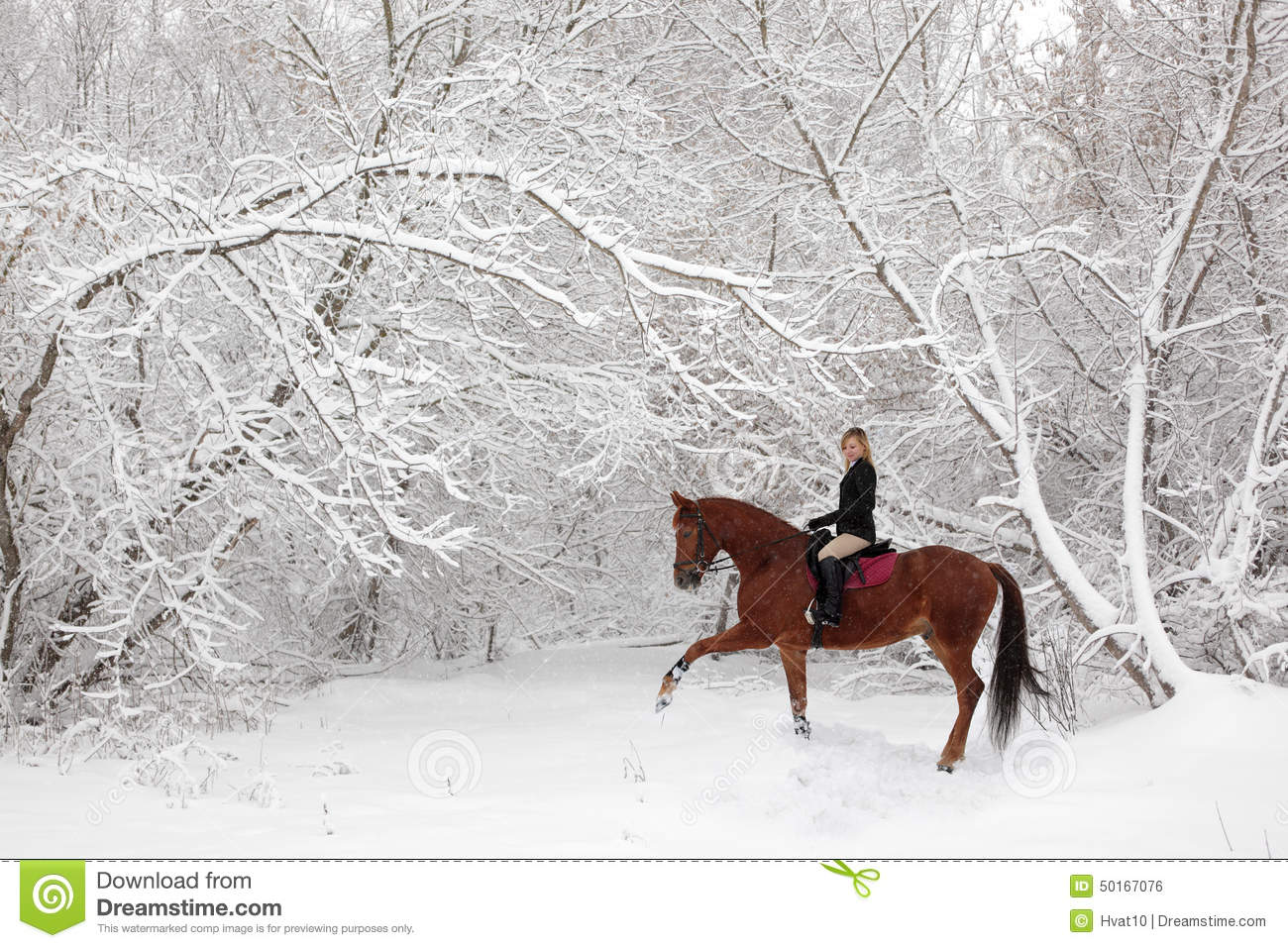 horseback riding in scenic winter snowfall stock photo. Black Bedroom Furniture Sets. Home Design Ideas
