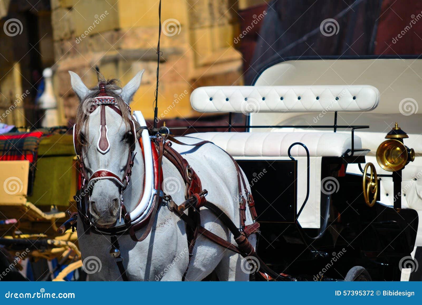 Horsedrawn vervoer in Cordoba, Spanje