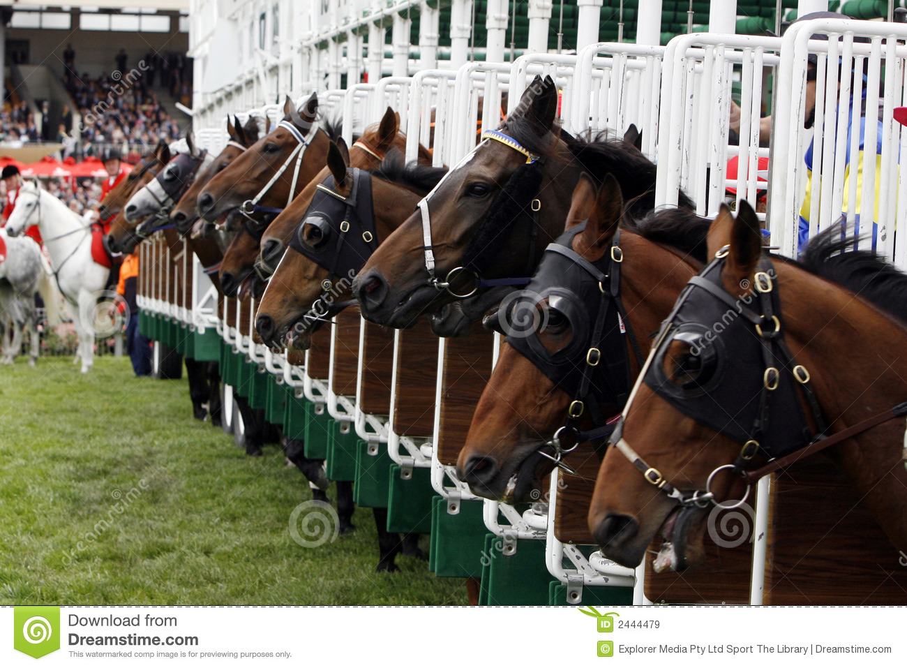 Horserace Start Gate Royalty Free Stock Images - Image: 2444479