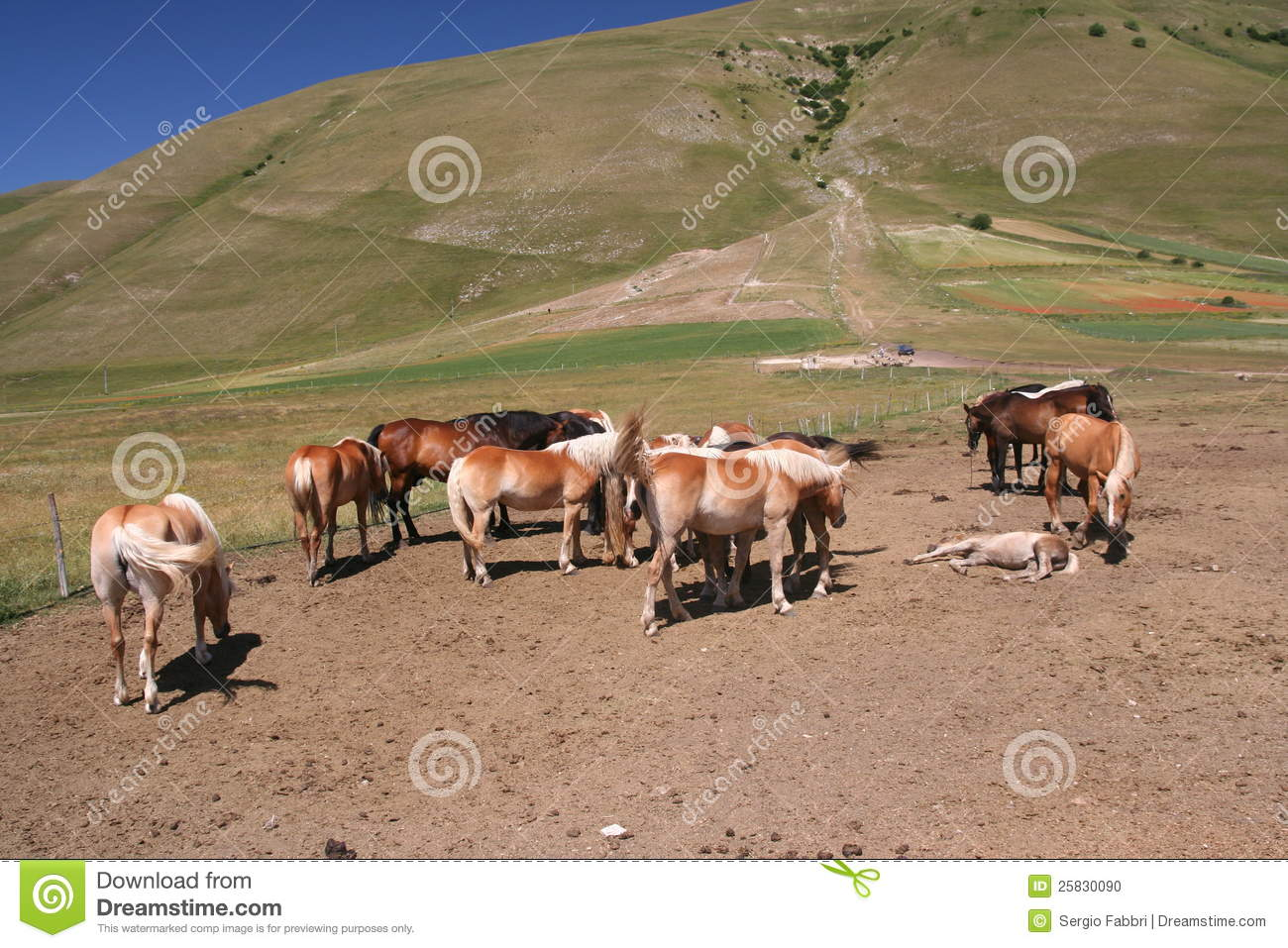 horses in castelluccio di norcia stock photo image 25830090 clipart grass and flowers clipart glass with water