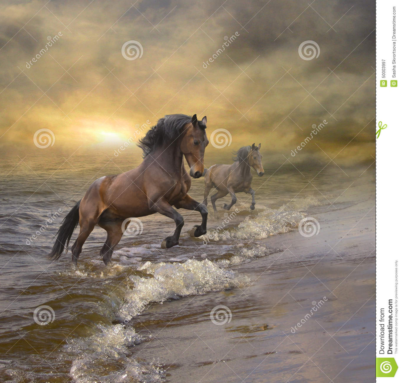 Horses Coming Out Of T...