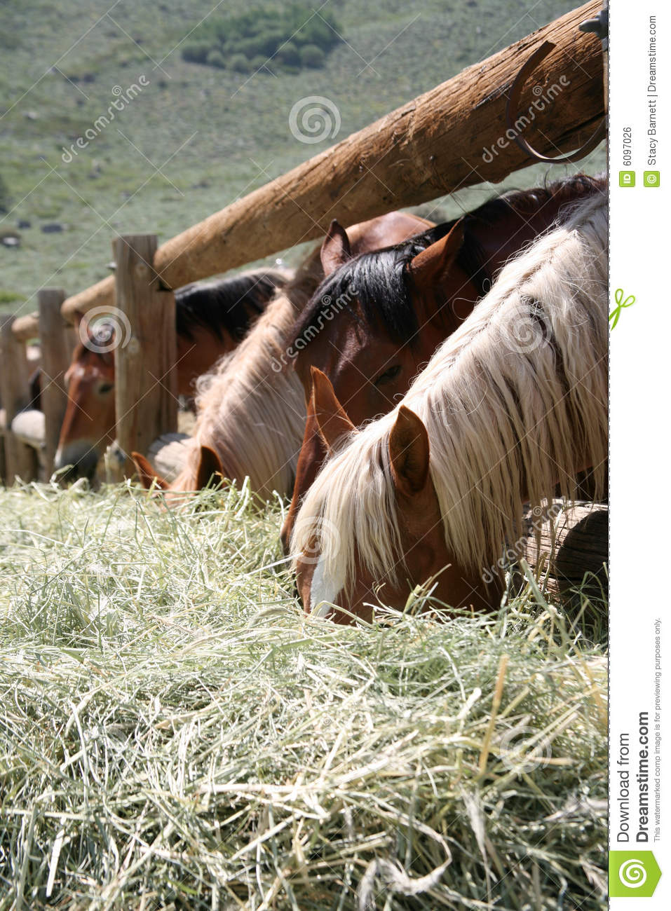 Horse eating country