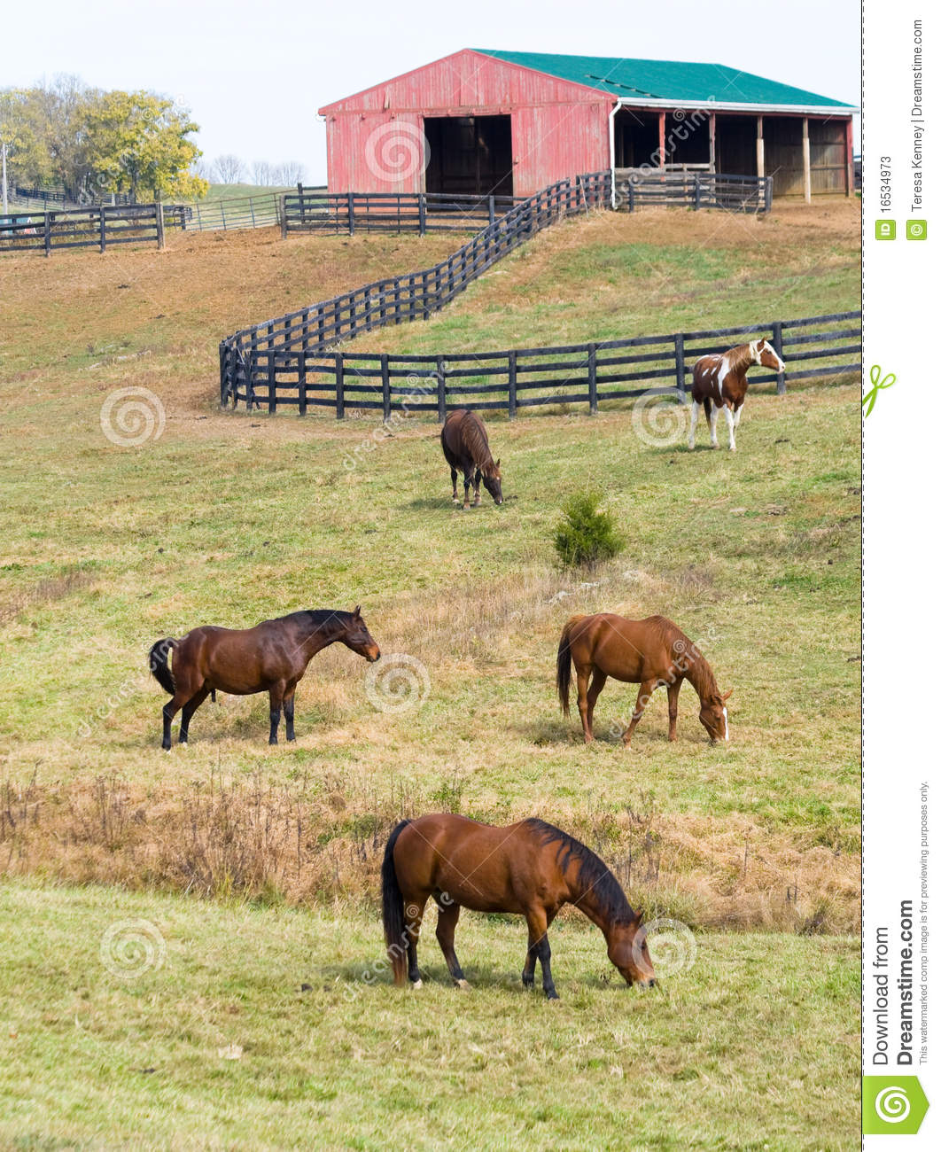 Horses on farm stock image image of early quarter green for Horse farm