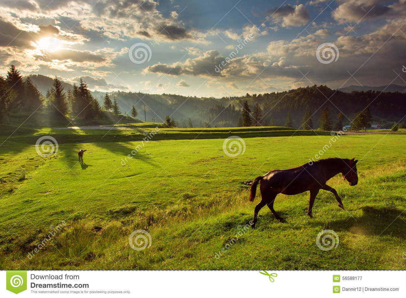 Horses in forest at sunset under cloudy sky.