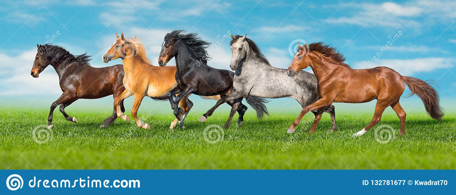 Horses run fast on field