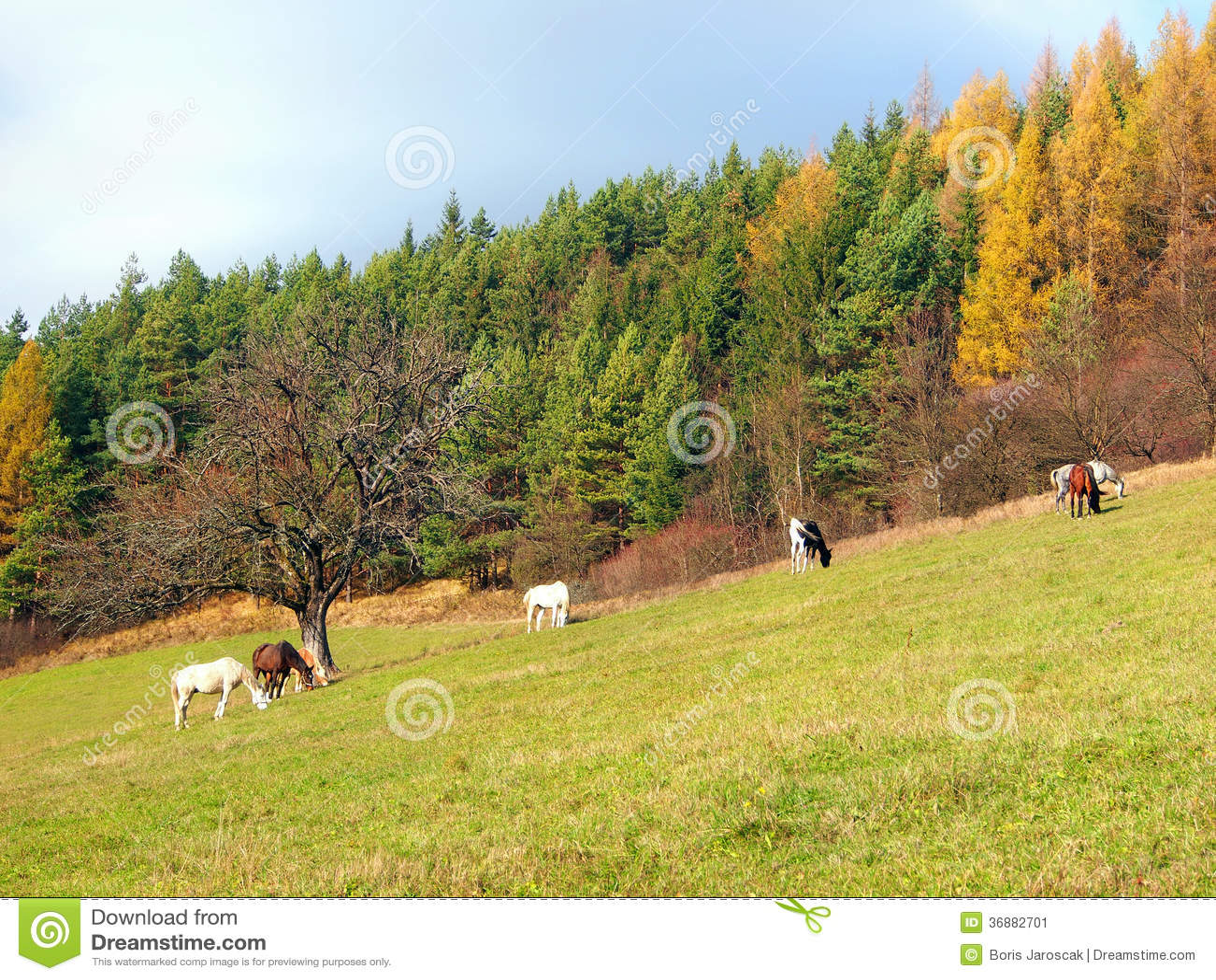 Horses grazing in autumn field