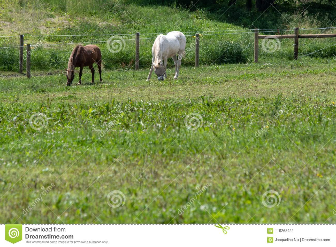 Horses Grazing With Blank Area On Bottom Stock Photo - Image of ...